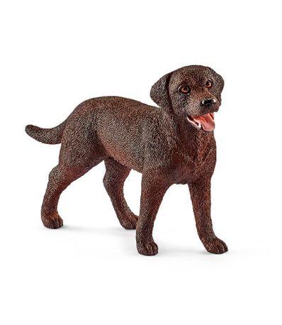Labrador-Retriever-Feminino