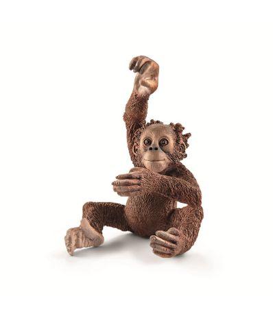 Figura-orangotango-Breeding