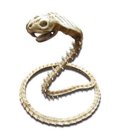 Decoracion-Halloween-Esqueleto-de-Serpiente