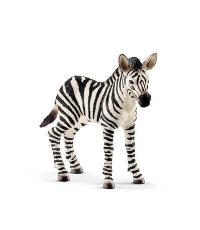 Figura-de-reproducao-da-zebra