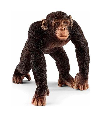 Figure-Chimp-Homme