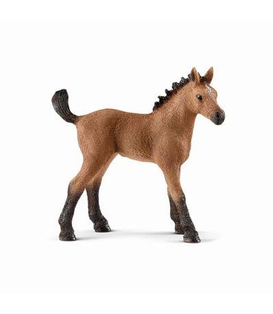 Figure-Foal-trimestre