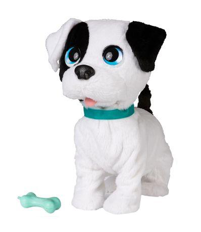 Cachorro-Bowie-Beijinhos-de-Verdade