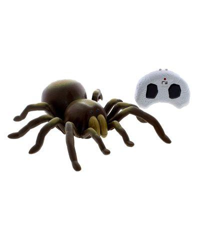 Tarantula-R---C